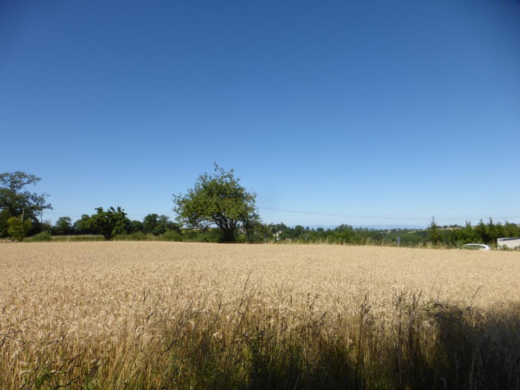 Grand terrain à bâtir - BARAQUEVILLE - 9600 m² environ.